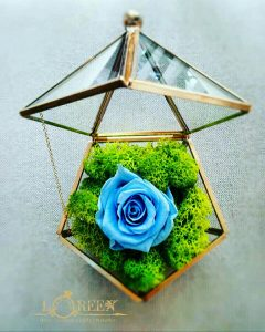 Terariu - Trandafir Criogenat Albastru
