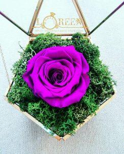 Terariu - Trandafir Criogenat Magenta - Mov