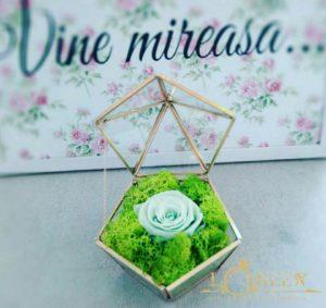 Terariu - Trandafir Criogenat Menta