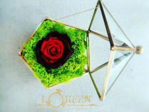 Terariu - Trandafir Criogenat Rosu